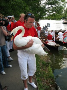 Swan Upping day