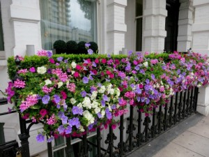 London window box