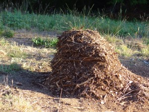 Stick pile